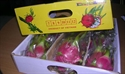 Picture of Fresh Dragon fruit